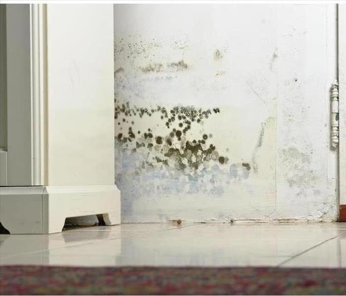 Mold Remediation Why Prior Mold Issues Make You More Susceptible Now