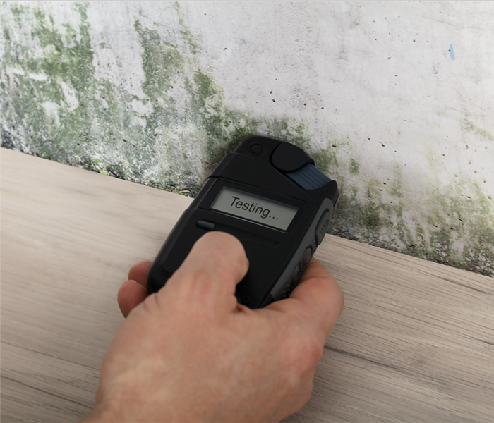 Someones hand holding a moisture meter on a wall testing for mold