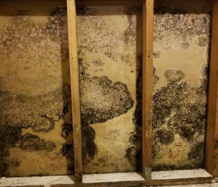 Mold Remediation 3 Common Areas Where Mold Might Grow in Your Commercial Building