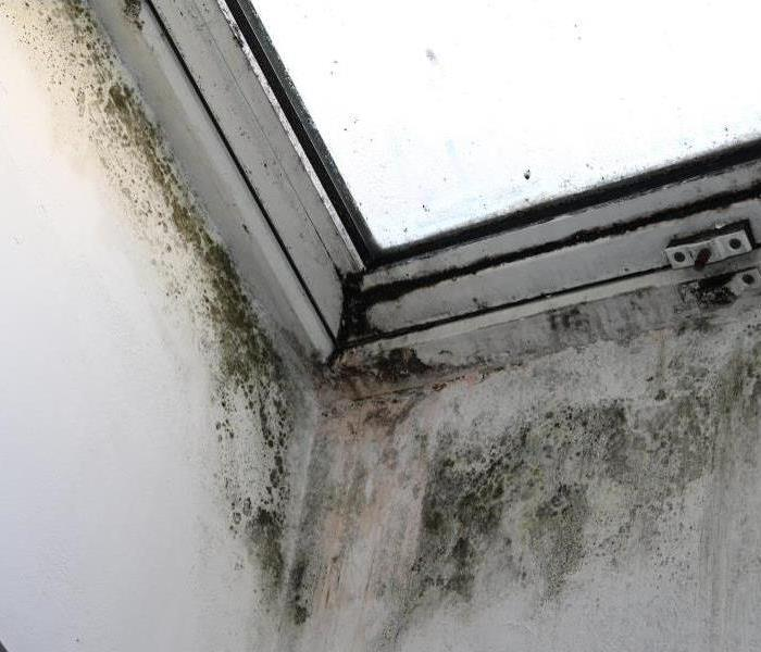Mold Remediation Can You Spot the Difference Between Mold and Mildew?